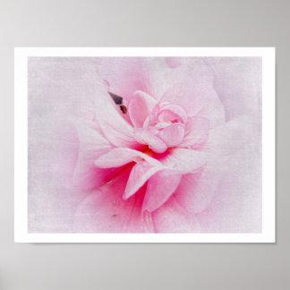 Macro rosada del geranio poster