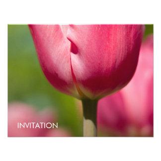 Macro rosada DSC0852 del tulipán Invitacion Personal