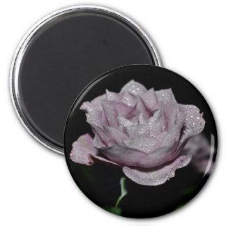Macro Rose-014 Refrigerator Magnets
