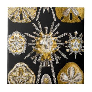 Macro Sea Creatures Ceramics ~ Sea Urchins Tile