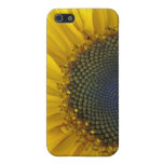 Macro Sunflower Covers For iPhone 5