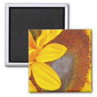 Macro Sunflower Magnet
