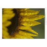Macro Sunflower Note Card