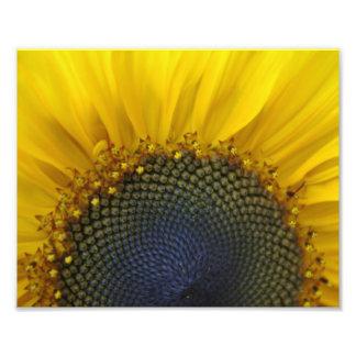 Macro Sunflower Photographic Print