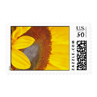 Macro Sunflower Postage