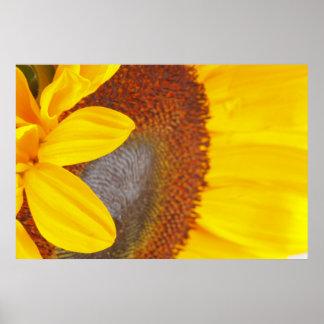 Macro Sunflower Poster