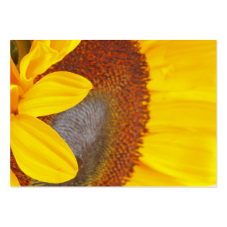 Macro Sunflower Profile Card Large Business Cards (Pack Of 100)