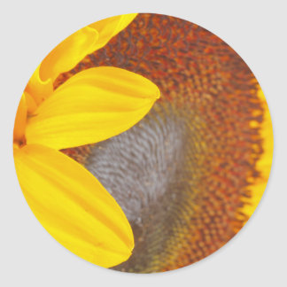 Macro Sunflower Sticker