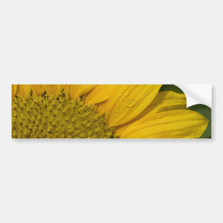 Macro Sunflower With Raindrops Bumper Stickers