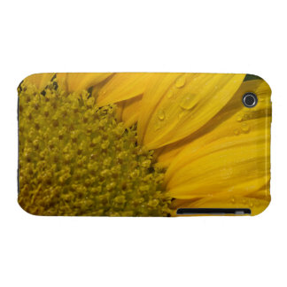 Macro Sunflower With Raindrops iPhone 3 Cases