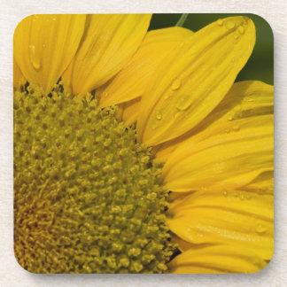 Macro Sunflower With Raindrops Drink Coaster