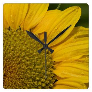 Macro Sunflower With Raindrops Square Wall Clock