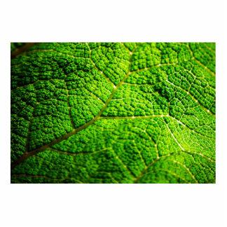 Macro verde de la hoja esculturas fotográficas