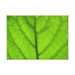 Macro verde de la hoja impresion de lienzo