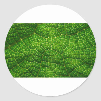 Macro verde de la hoja pegatina redonda