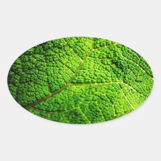 Macro verde de la hoja pegatina ovalada