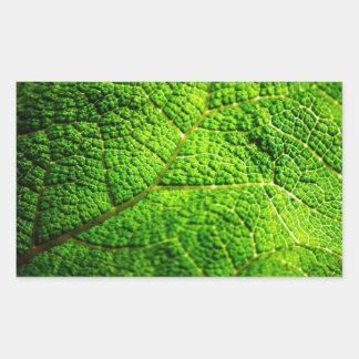 Macro verde de la hoja pegatina rectangular