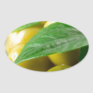 Macro view of the olives with green leaves closeup oval sticker