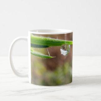 Macro Water Drop on Gorse Coffee Mug