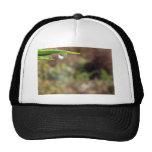 Macro Water Drop on Gorse Hat