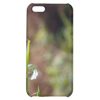 Macro Water Drop on Gorse iPhone 5C Cases