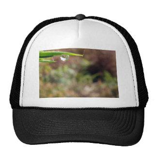 Macro Water Drop on Gorse Trucker Hat