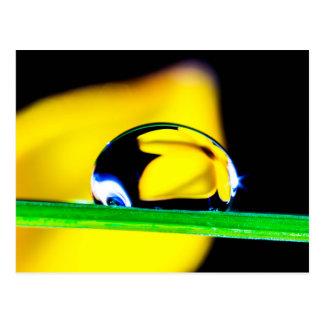 Macro Water Drop Yellow Flower Photo Postcard