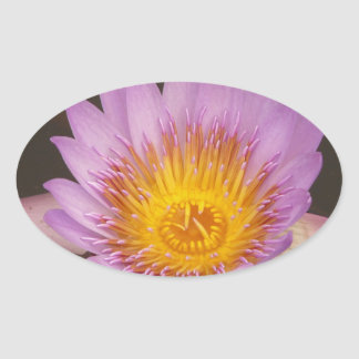Macro Water Lily Lotus Oval Sticker