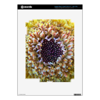 Macro Yellow Flower Center Decal For iPad 3