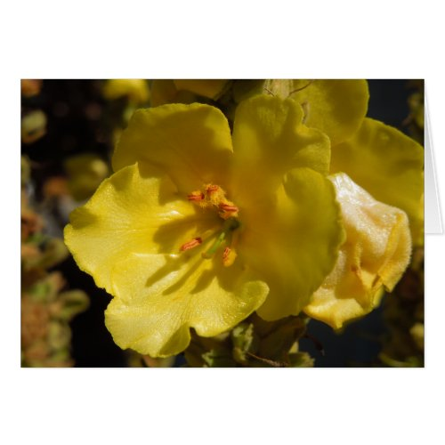 Macro Yellow Mullein Flower Card