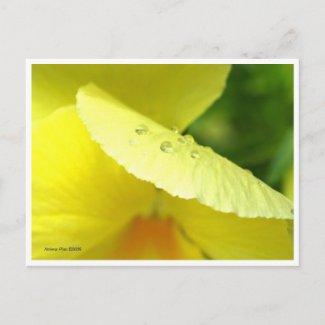 Macro Yellow Petals Postcard postcard