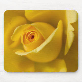 Macro Yellow Rose Mouse Pads