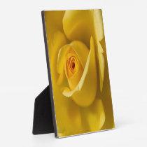 Macro Yellow Rose Plaque