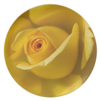 Macro Yellow Rose Plate