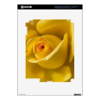 Macro Yellow Rose iPad 3 Decal