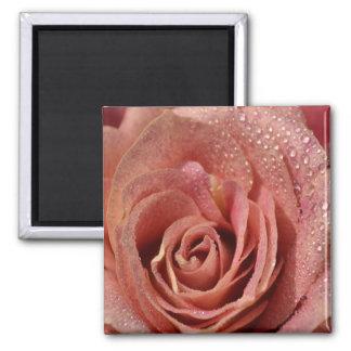 Macros Antique Rose Magnet
