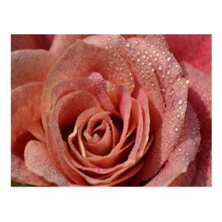 Macros Antique Rose Post Card