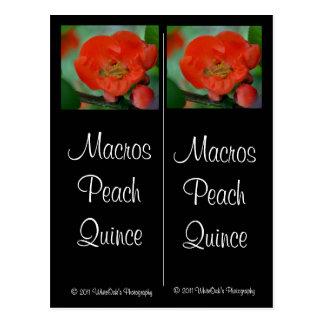 Macros Peach Quince Postcard