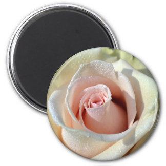Macros Porcelain Rose Fridge Magnets