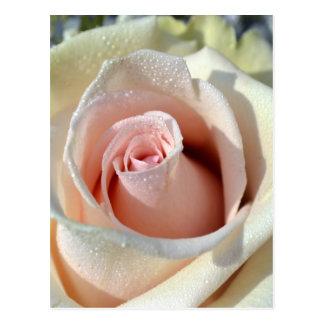 Macros Porcelain Rose Post Cards