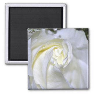 Macros White Rose-Jun2011 Refrigerator Magnet