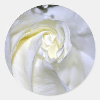 Macros White Rose-Jun2011 Stickers