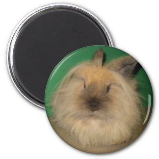 Mad Bunny 2 Inch Round Magnet