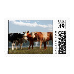 Mad Cows Stamp