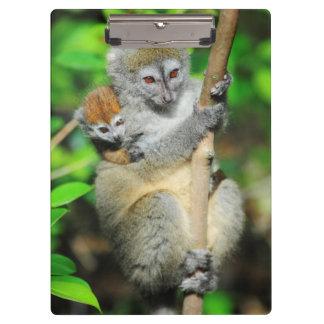 Madagascar, Andasibe, Ile Aux Lemuriens, Mother Clipboard