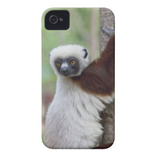Madagascar, Ankarafantsika Reserve, Ampijoroa. iPhone 4 Case