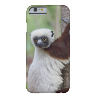 Madagascar, Ankarafantsika Reserve, Ampijoroa. Barely There iPhone 6 Case