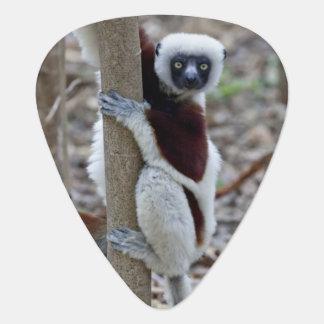 Madagascar, Ankarafantsika Reserve; Ampijoroa; Guitar Pick