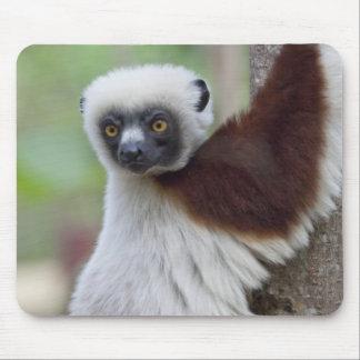 Madagascar, Ankarafantsika Reserve, Ampijoroa. Mouse Pad