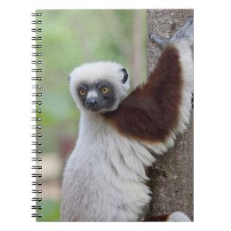 Madagascar, Ankarafantsika Reserve, Ampijoroa. Notebook